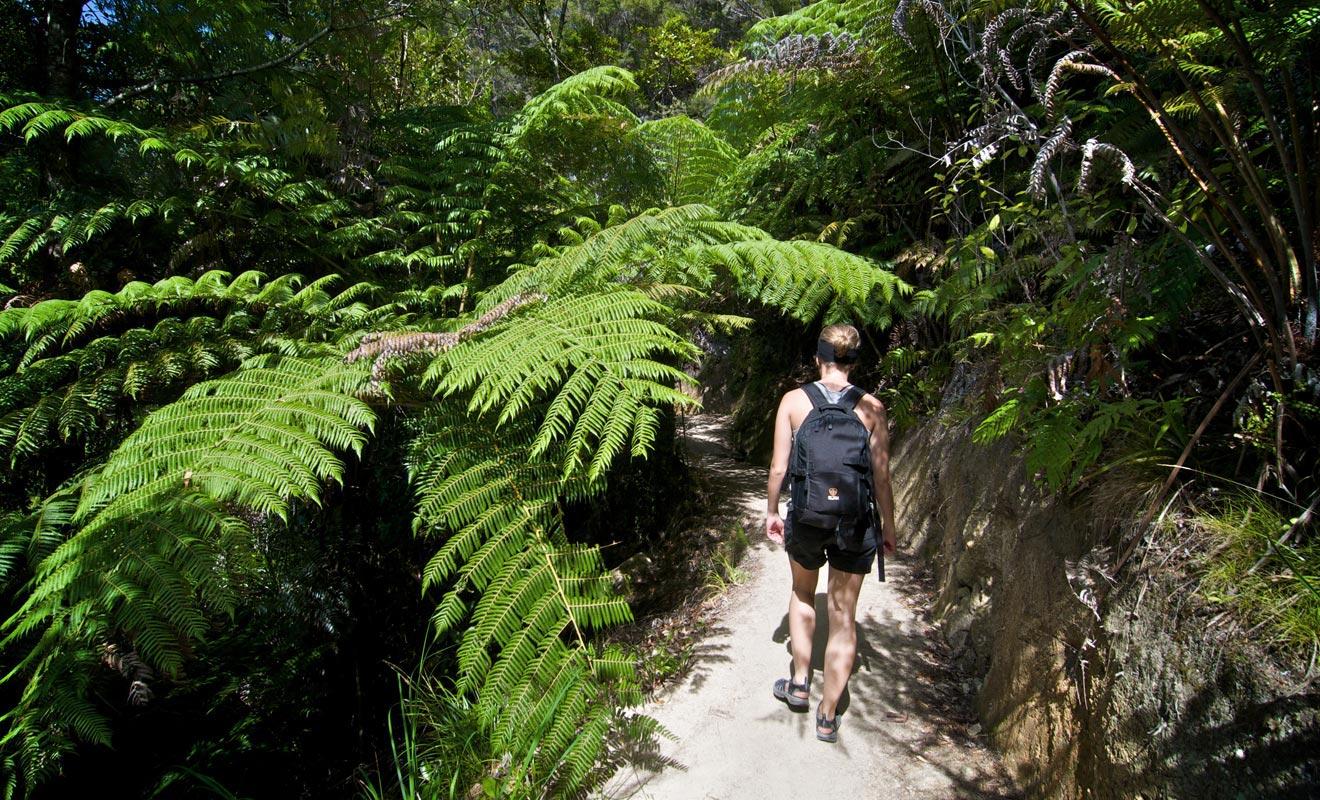 Le sentier de l'Abel Tasman Coast Track alterne passages en forêt et plages de sable fin orangé. L'intégralité du parcours couvre 55 km sur 3 à 5 jours de randonnée !