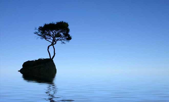 L'arbre solitaire de Tinline Bay pousse sur un rocher isolé au large. Difficile de trouver un sujet plus photogénique.