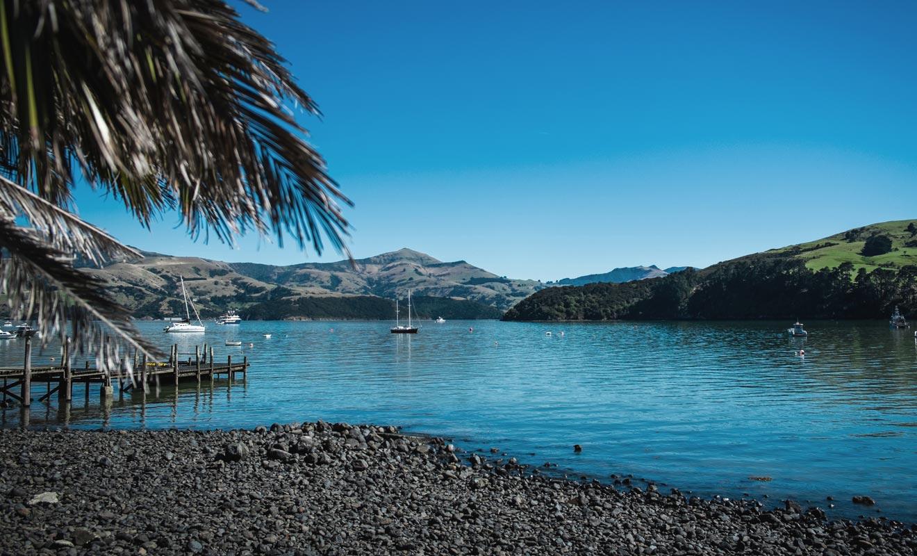 Le petit village français d'Akaroa n'est pas le seul centre d'intérêt de la Péninsule de Banks. Non loin de Christchurch il est possible de partir nager avec les dauphins. La compagnie Black Cat organise des sorties en mer qui permettent d'observer ou de rejoindre les mammifères marins dans l'eau.