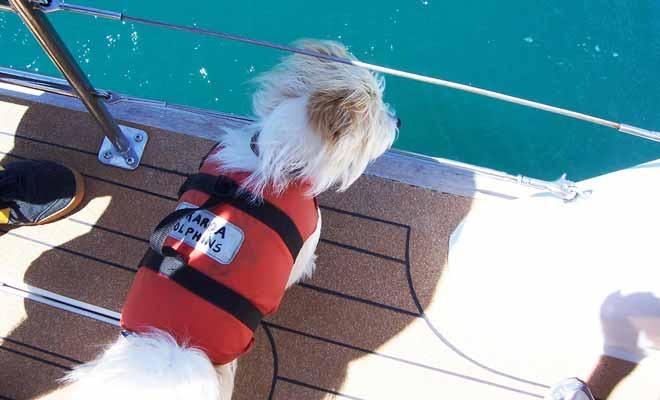 Ce petit chien dont le vrai nom est Murphy, est chargé de repérer les dauphins dans la baie. Il aboie dès qu'il perçoit les cris aigus des dauphins.