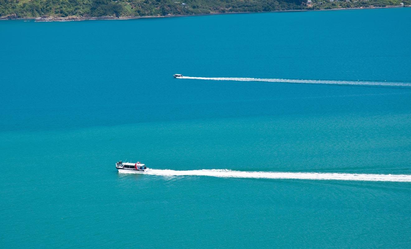 Embarquez à bord du Blackcat pour explorer la Péninsule de Banks. Le nombre de passagers est volontairement limité pour ne pas effrayer les dauphins.