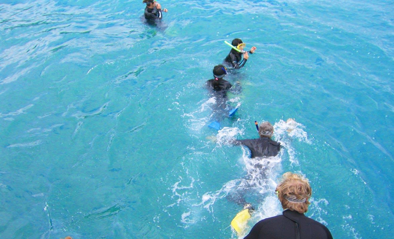 Rien n'est plus agréable que de se baigner en compagnie des dauphins. Mais vous devrez porter une combinaison car l'eau est fraiche au large de l'île du Sud.