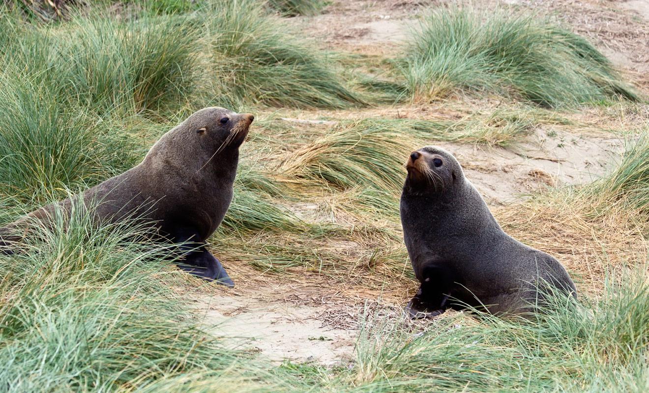 Les otaries peuvent sembler inoffensives avec leurs grands yeux expressifs, mais ces animaux marins sont capables de se défendre s'ils se sentent en danger.