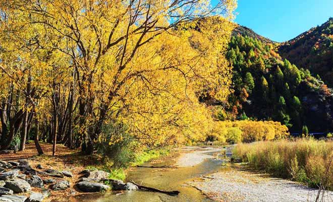 L'Anniversary Walk est une jolie promenade qui longe la rivière Arrow et qu'il est recommandé de suivre en automne.