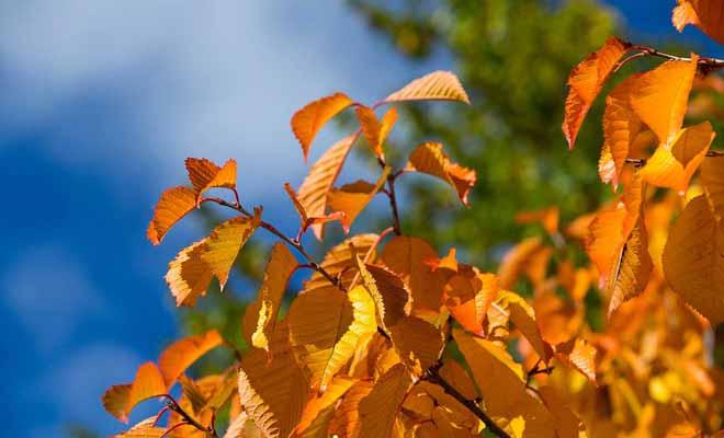 C'est à l'automne que le village est le plus beau, quand les feuilles des arbres deviennent orange avant de tomber.