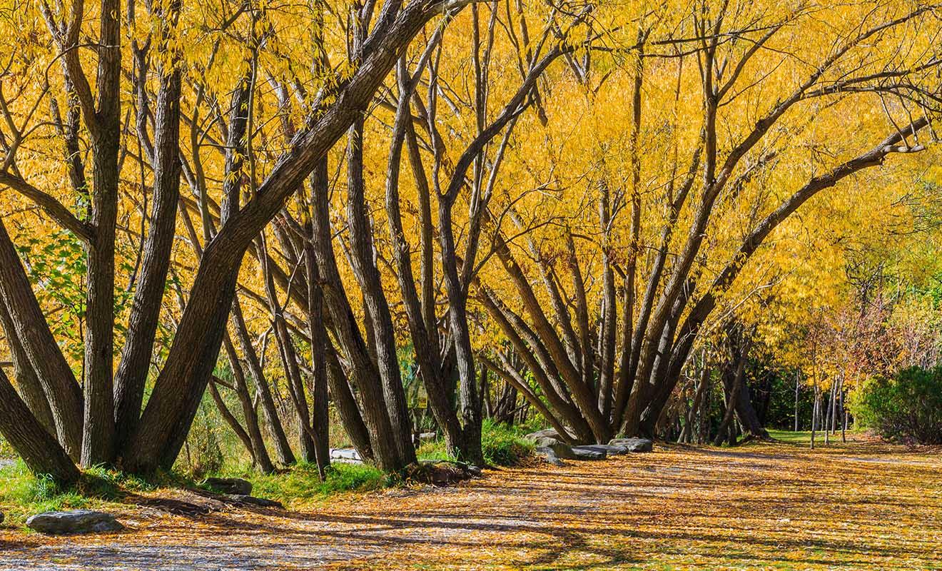Une grande partie de la promenade se fait à l'abri du soleil sous les arbres.