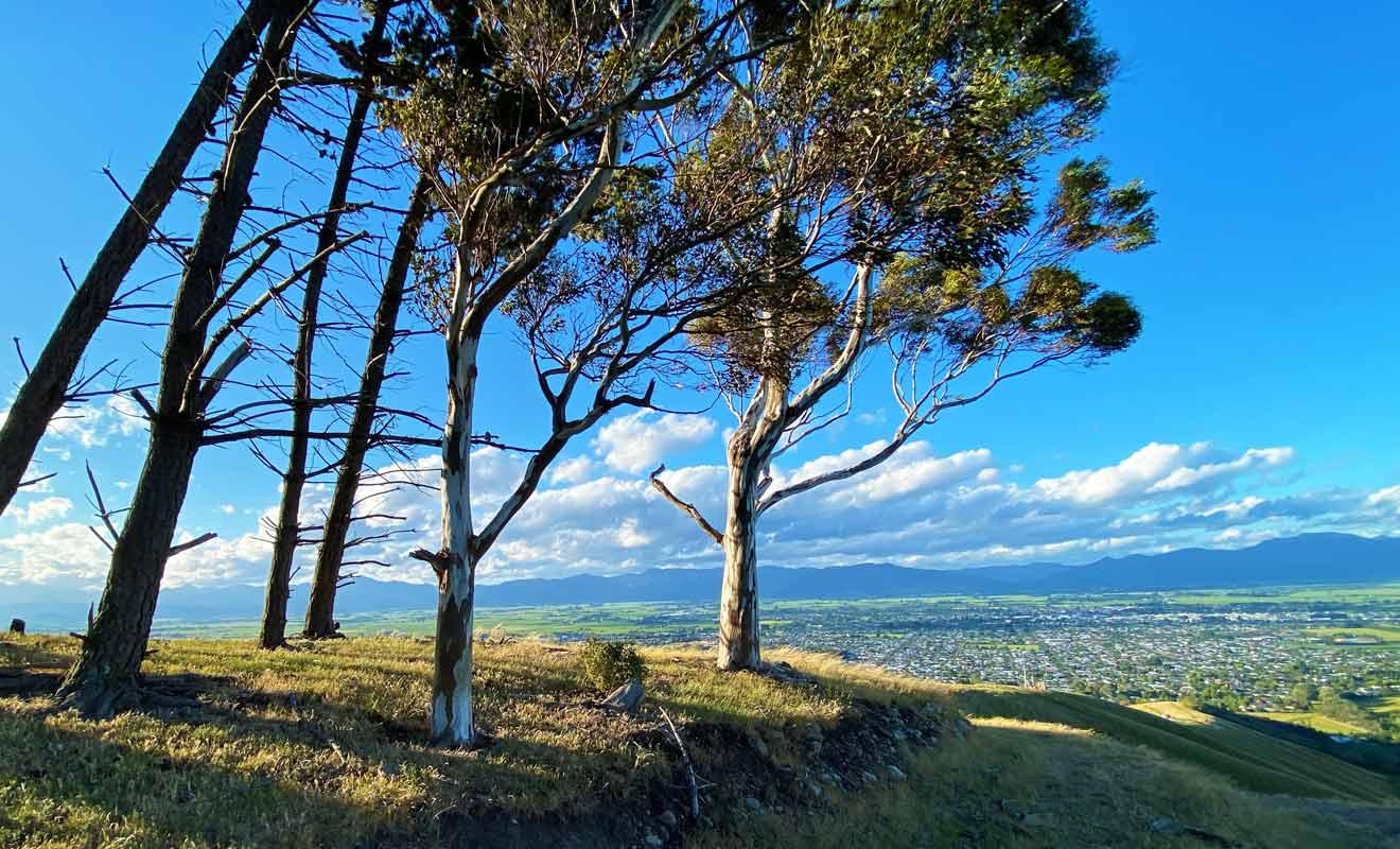 L'essentiel de la végétation est constitué d'herbes hautes et de tussack, mais l'on trouve aussi quelques arbres à Wither Hills.