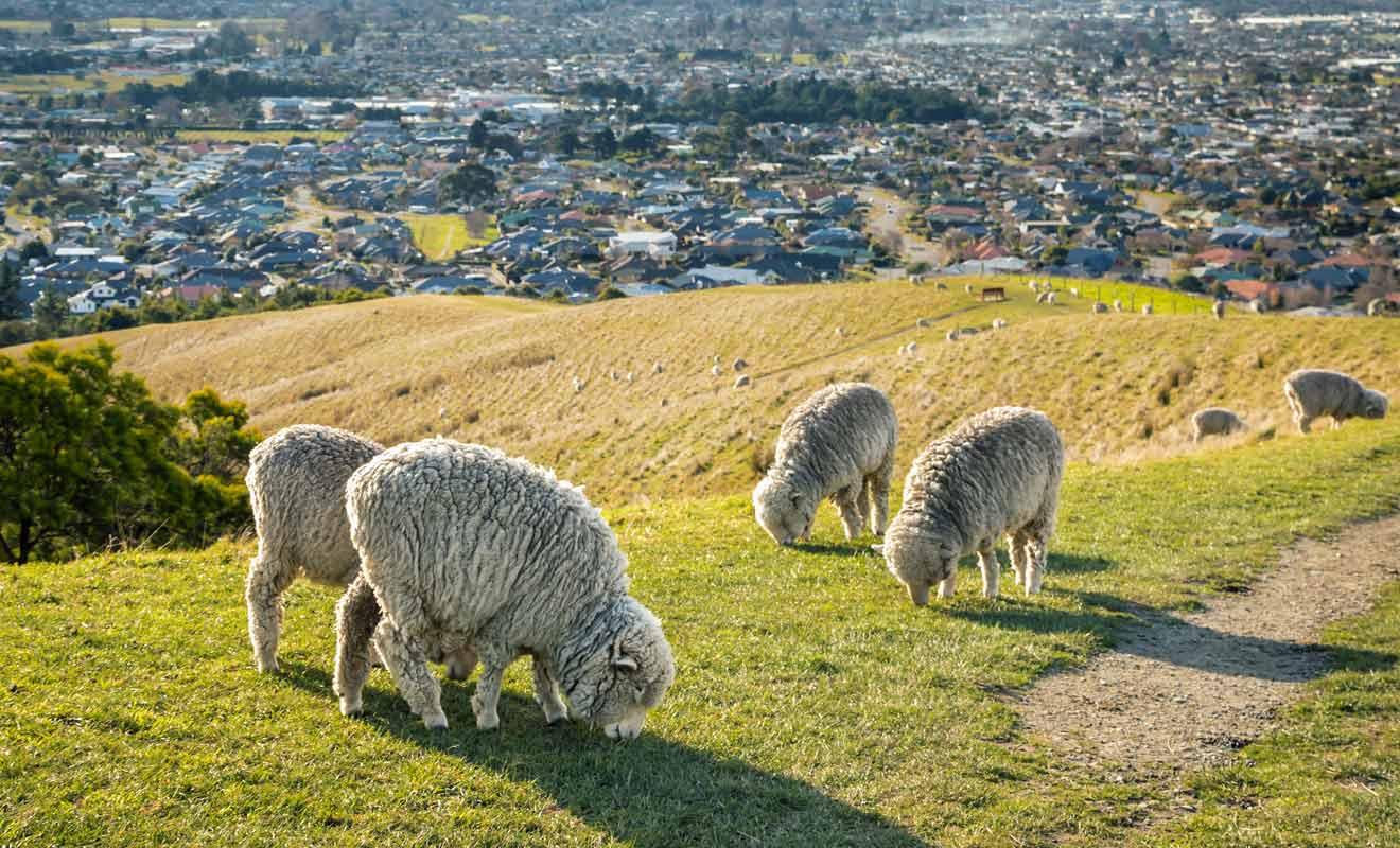 Les moutons se déplacent souvent sur le sentier, alors faites attention où vous mettez les pieds.