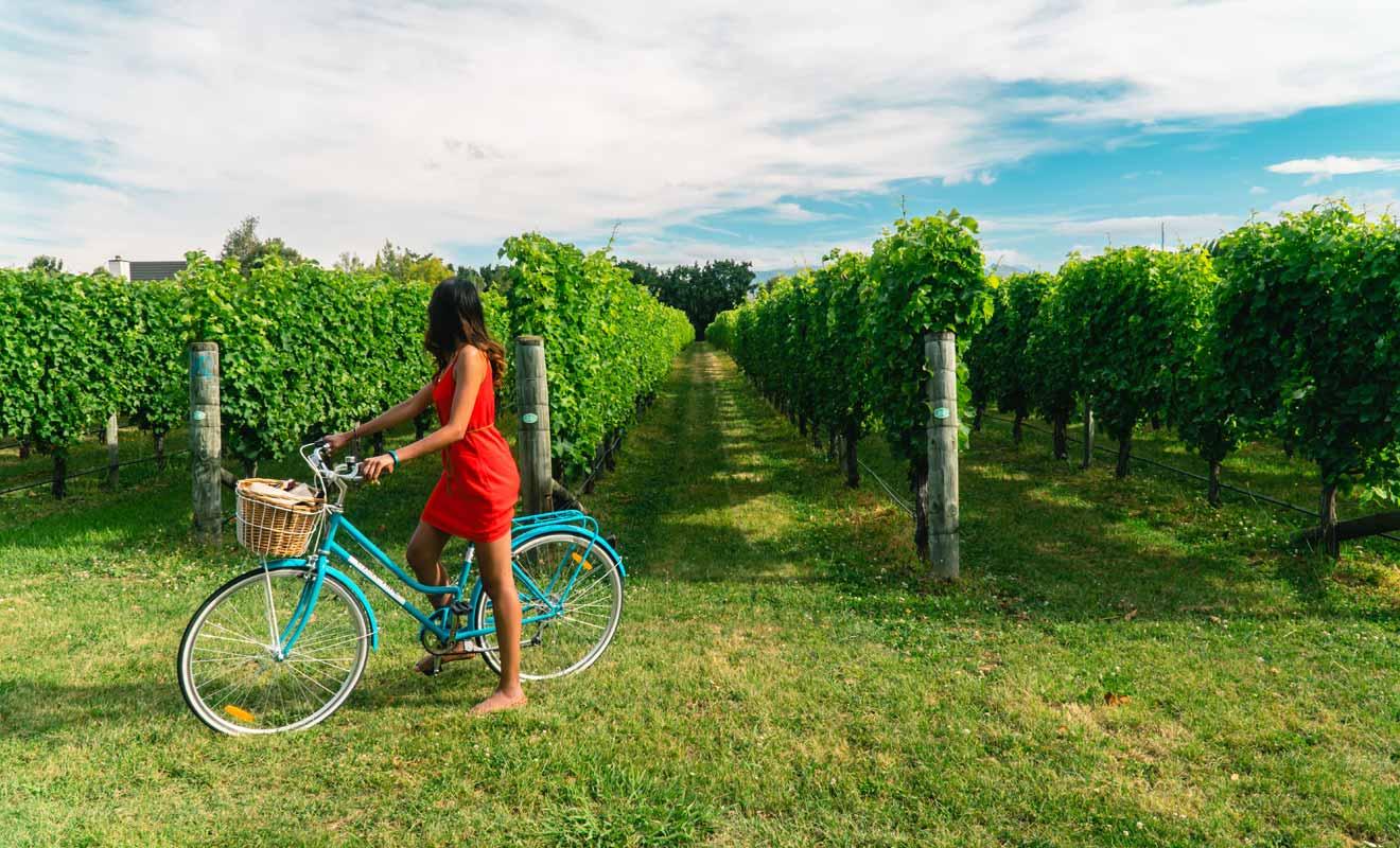 La présence d'un guide n'est pas indispensable si vous demander la carte gratuite des vignobles au i-Site de Blenheim.