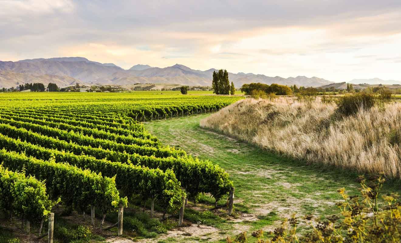 Il faut prévoir au moins une journée sur place pour visiter la ville et faire la tournée des caves à vin.