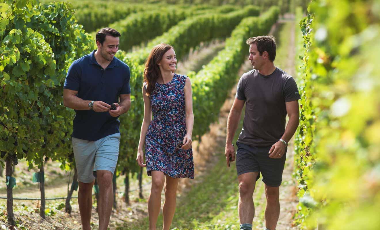 Faire la tournée des vignobles avec un guide expert du Marlborough permet d'en apprendre davantage sur la viticulture.