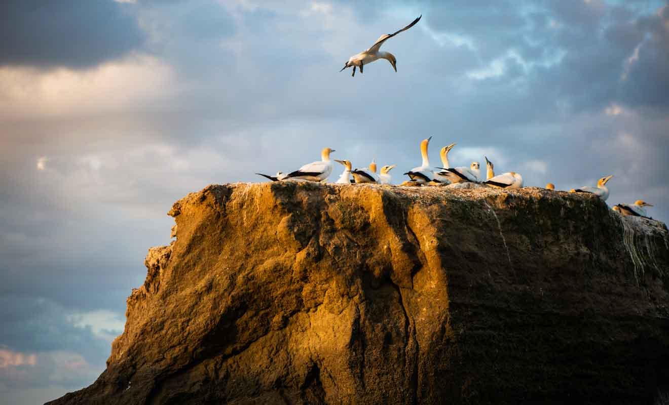 Il faut se tenir à distance de la colonie pour ne pas déranger les oiseaux.