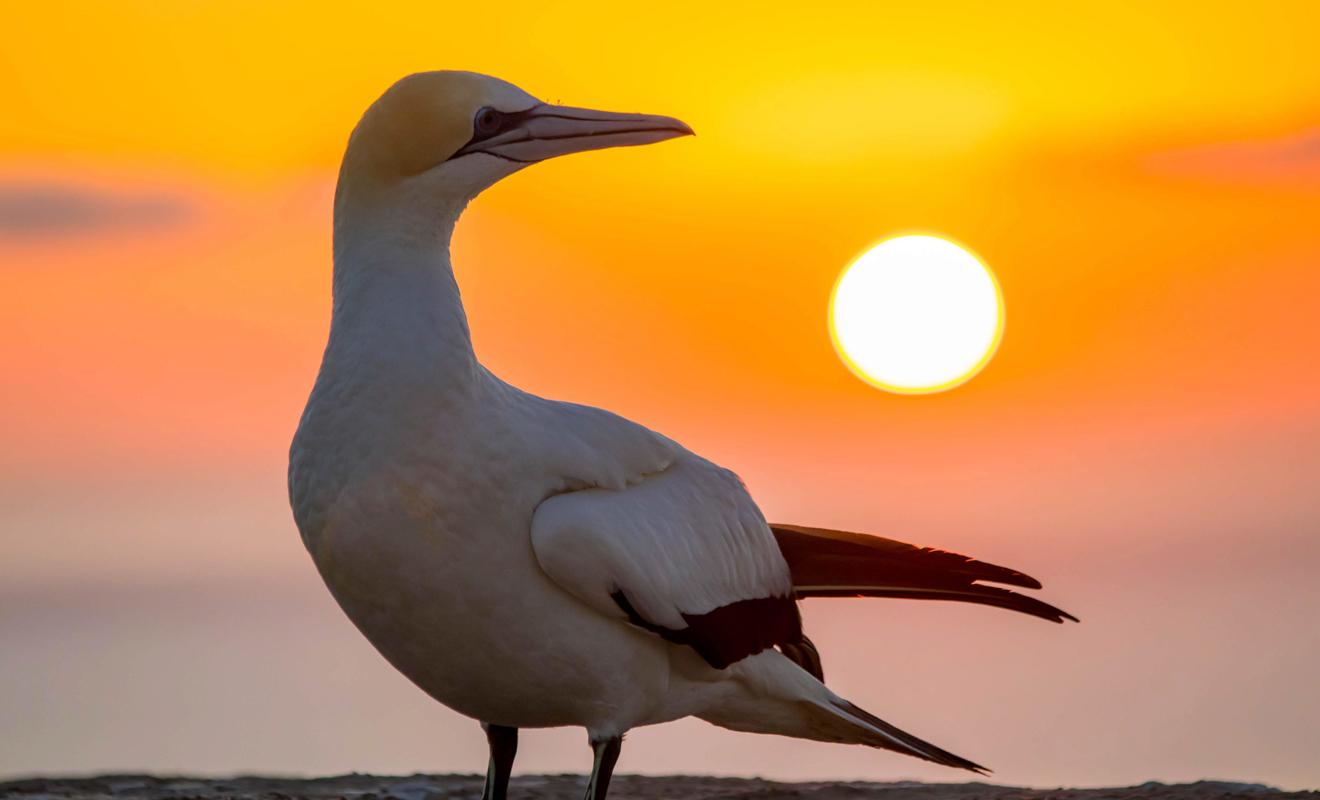 Pour assister au coucher du soleil sur le cap, il faudra impérativement passer par un tour opérateur ou se loger à la ferme.