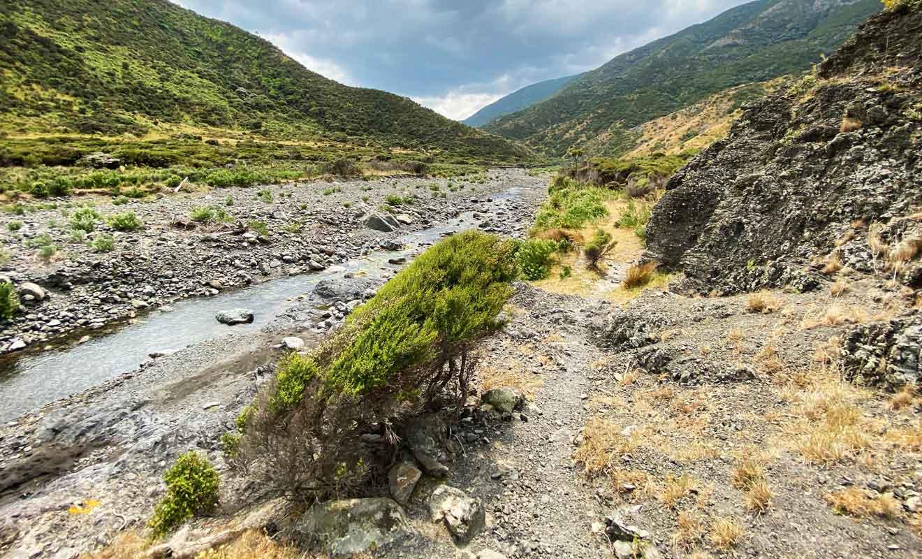 Cette partie du parc forestier d'Aorangi est souvent déserte.