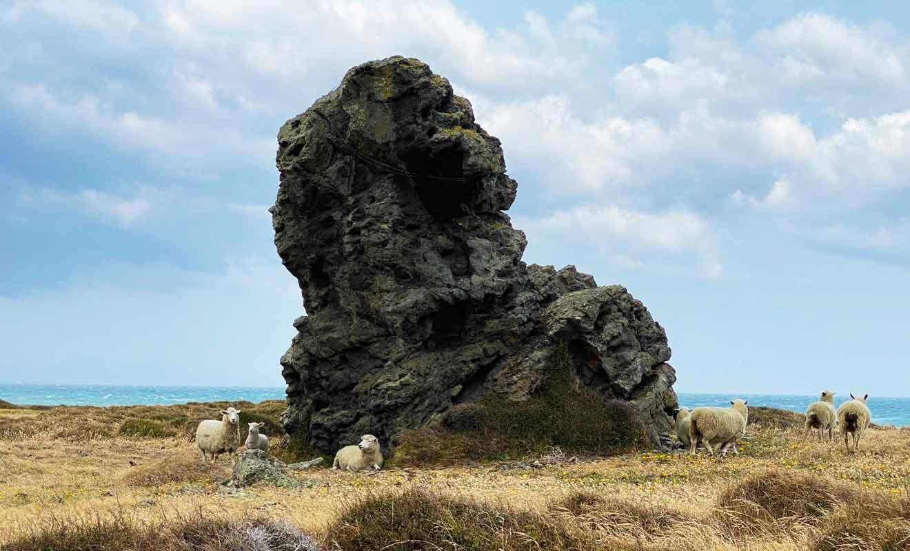 Le vent puissant qui balaye la plaine ne laisse aucun répit et même les moutons viennent s'abriter derrière des rochers.