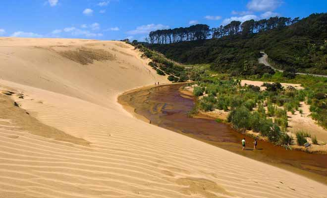 As a result of deforestation, there are large dunes not far from Cape Reinga. Te Paki attracts tourists and some do not hesitate to descend the dunes on surfboards.