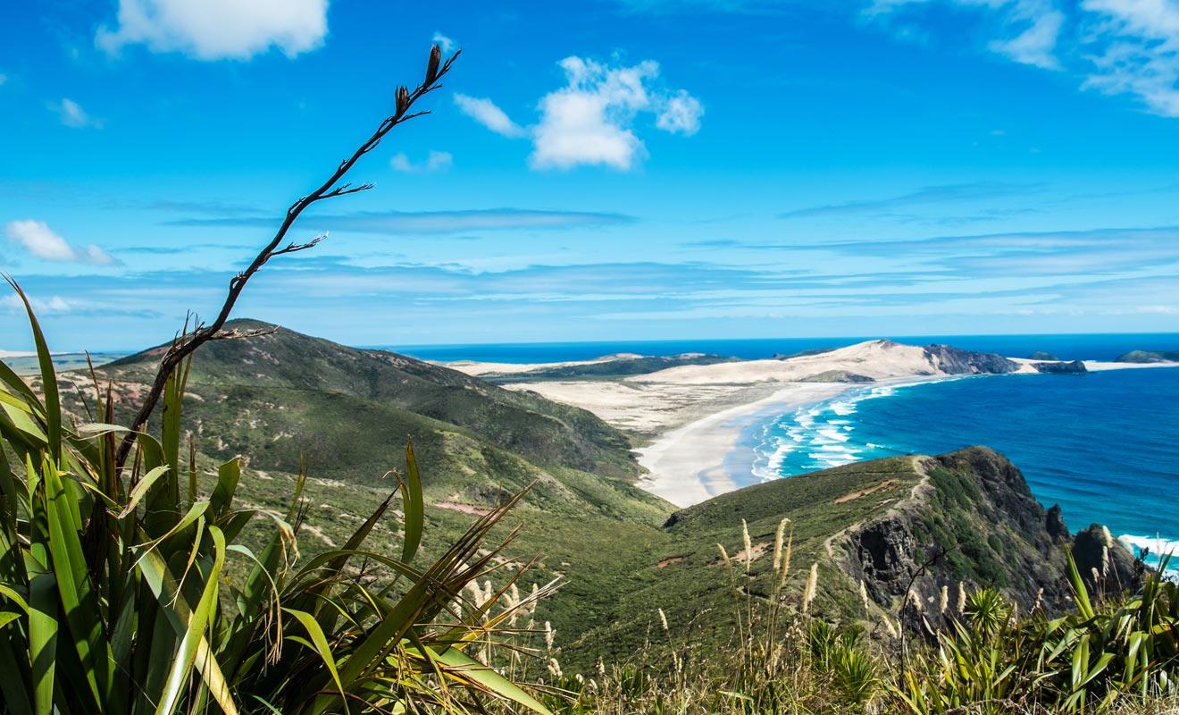 En plus de la Ninety mile beach, il est recommandé de faire un détour par Te Paki quant on se rend au Cape Reinga à la pointe du Northland. La déforestation a donné naissance à d'immenses dunes de sable que l'on peut dévaler sur une planche de surf. Il est même possible de louer sa planche sur place.