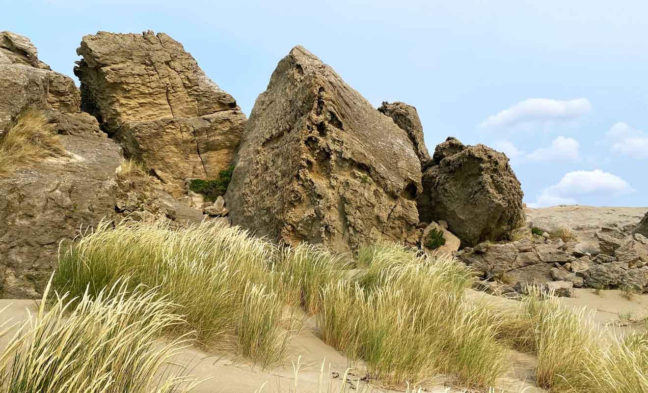 La présence de fossiles dans la roche permet de retracer l'histoire géologique de Castlepoint.