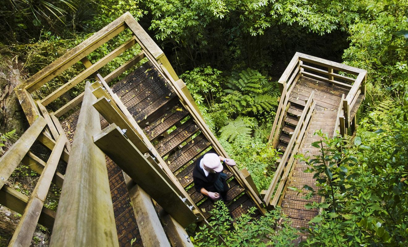 Des escaliers en bois ponctuent la randonnée en forêt et permettent de rejoindre la plage de Cathedral Cove. Hélas, il faudra emprunter ce trajet au retour et la montée sera plus difficile que la descente !