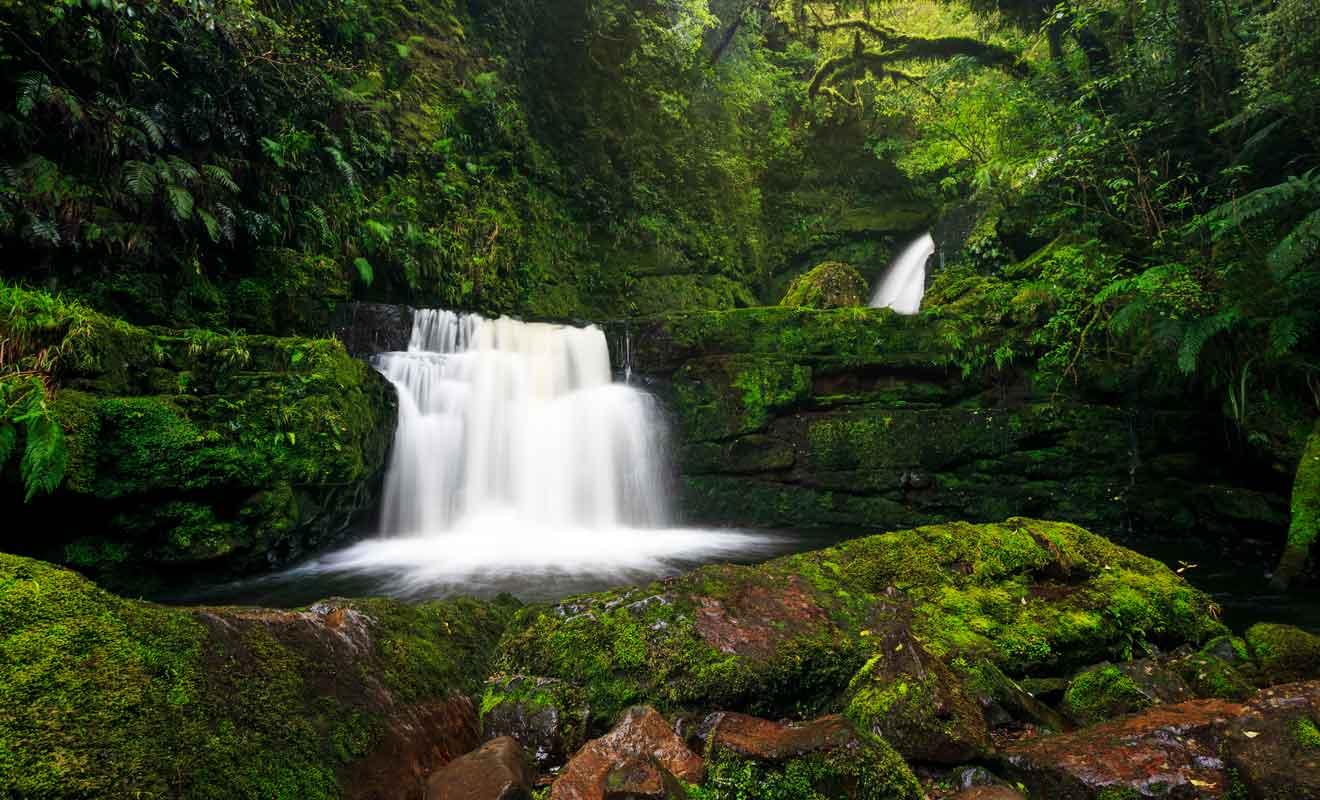 Dans cette région où il pleut beaucoup, la mousse recouvre les rochers comme les troncs d'arbres.