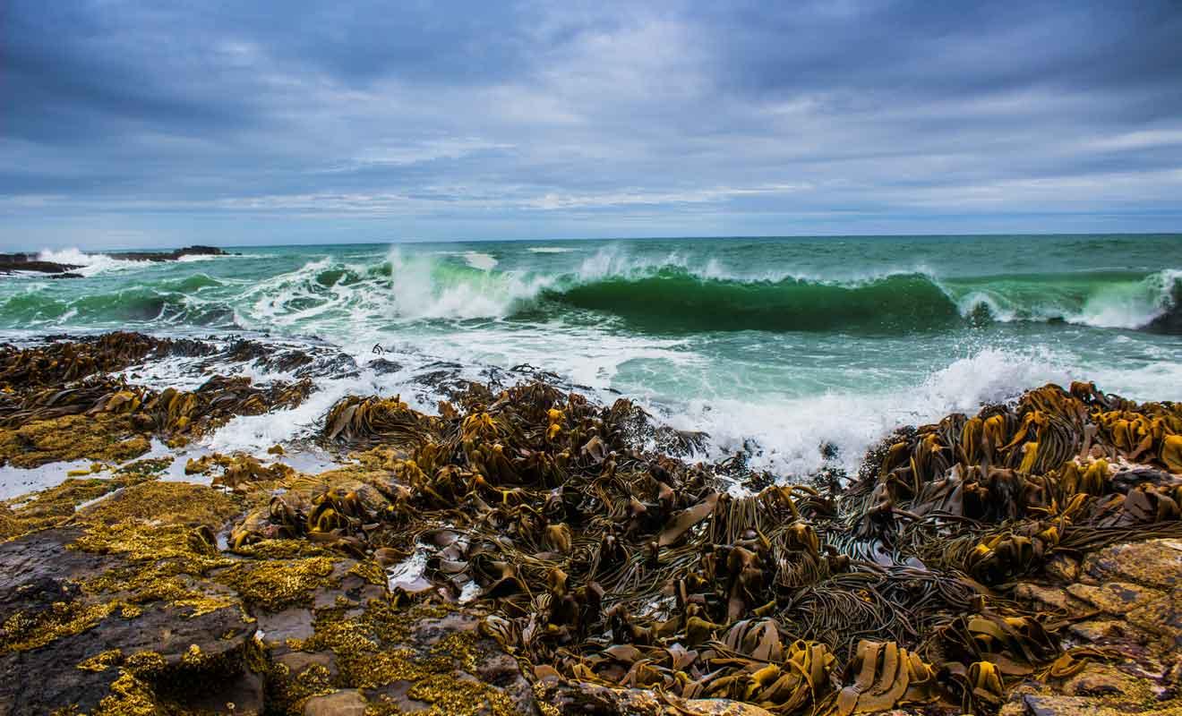 Seuls les surfeurs expérimentés peuvent s'aventurer dans les vagues des Catlins.