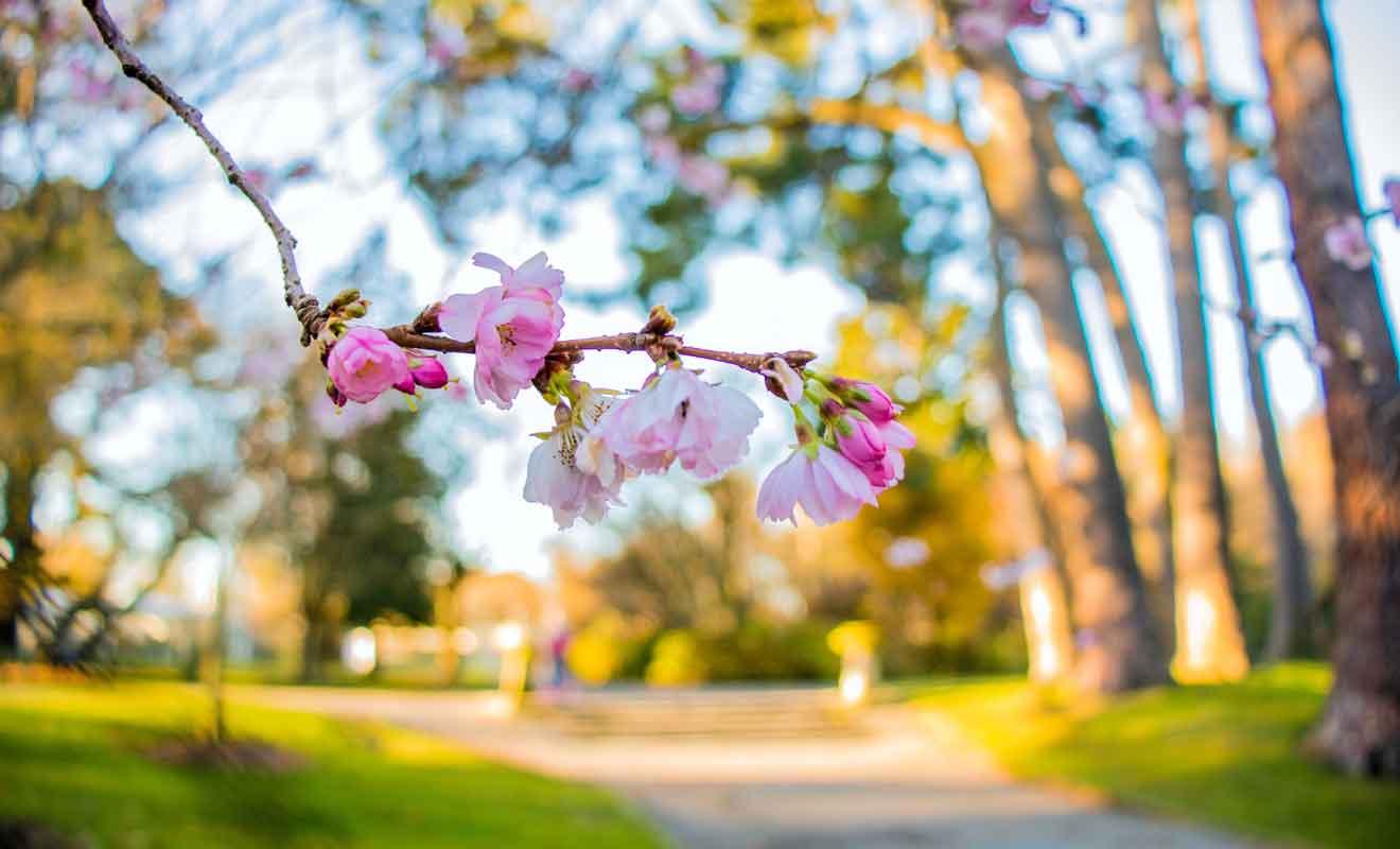 Chaque saison possède ses avantages et vous pouvez visiter le parc toute l'année.