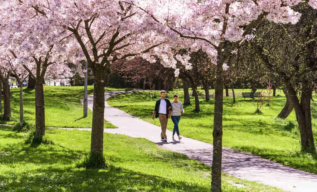 Avec sa centaine d'hectares en plein centre-ville, Hagley Park est voisin du Jardin botanique.