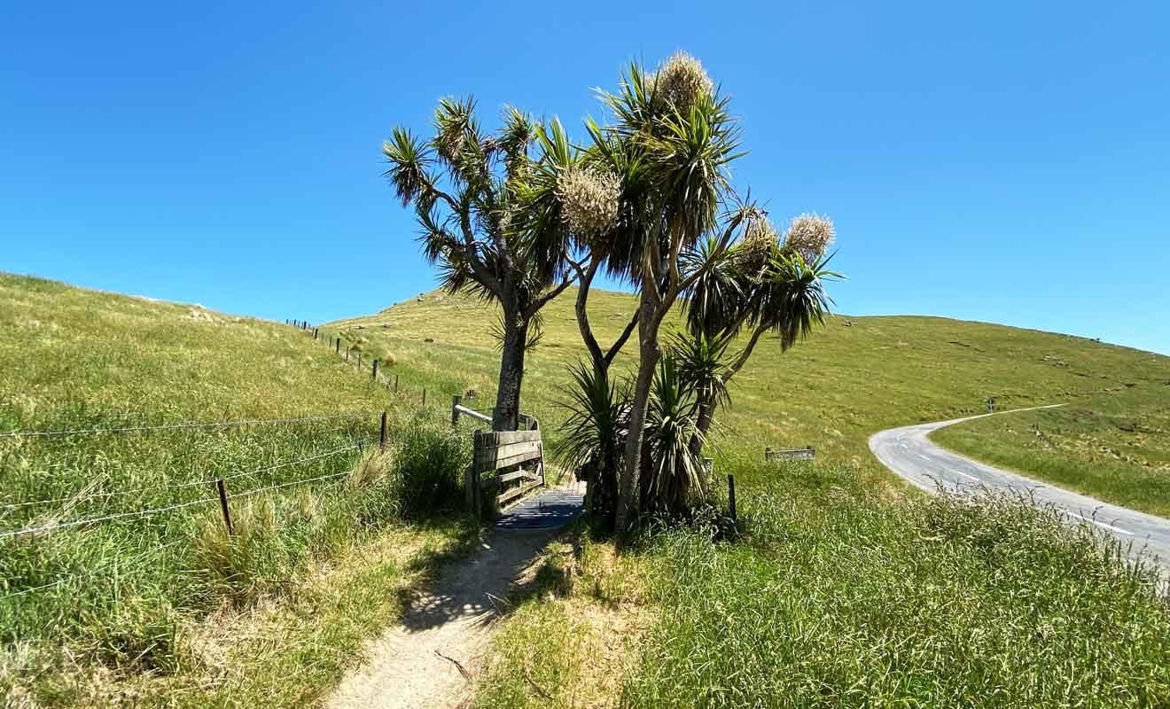 Il n'y a pas de raison particulière de refaire toute la randonnée en sens inverse, alors autant suivre la route au retour pour revenir plus vite à Christchurch.