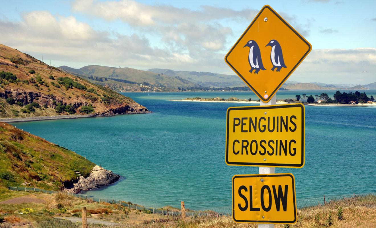 Certains panneaux de la route peuvent prêter à sourire, mais ils doivent être pris au sérieux même lorsqu'ils annoncent un risque de traversée de pingouins ou de kiwis.