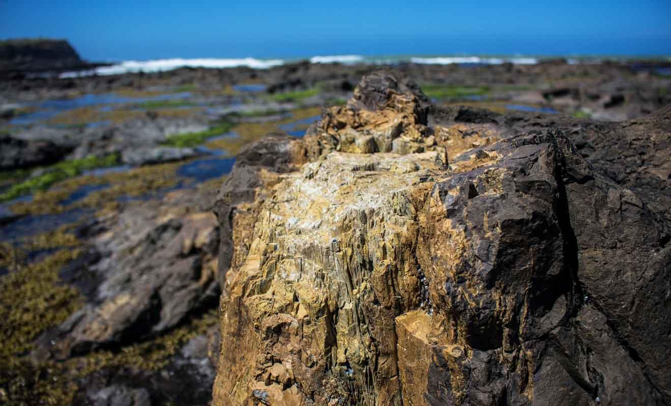 Des coulées de boues volcaniques ont engendré des fossiles de la végétation d'il y a 160 millions d'années.