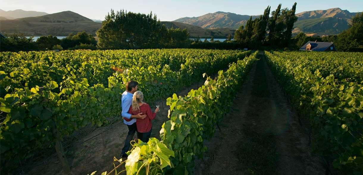 Venez visiter les vignobles et déguster les vins de Nouvelle-Zélande.