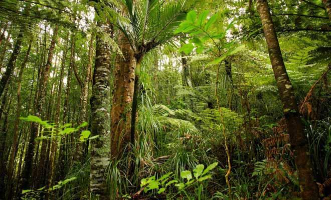 La forêt tropicale qui pousse dans la région est particulièrement dense et humide. C'est un régal pour les yeux, mais un véritable cauchemar pour les explorateurs.