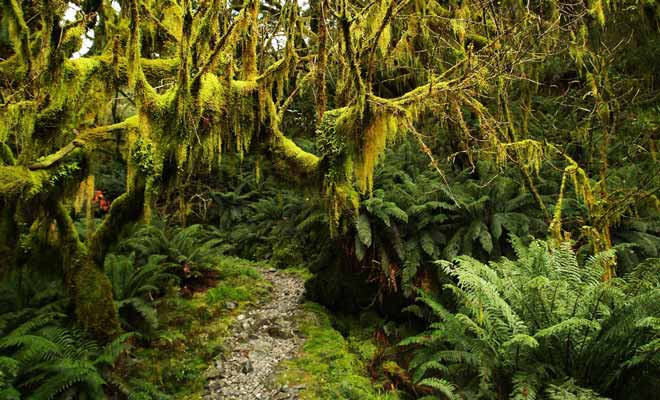 La mousse recouvre le moindre centimètre carré du Fiordland.