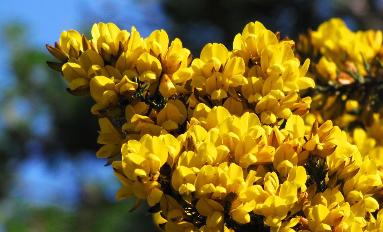 Le Jardin botanique compte près de 300 variétés de rhododendrons.
