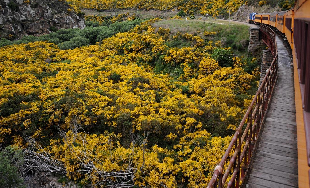 On quitte souvent Dunedin à regret, mais l'excursion de Taieri Gorge Railway est un excellent remède à la déprime.