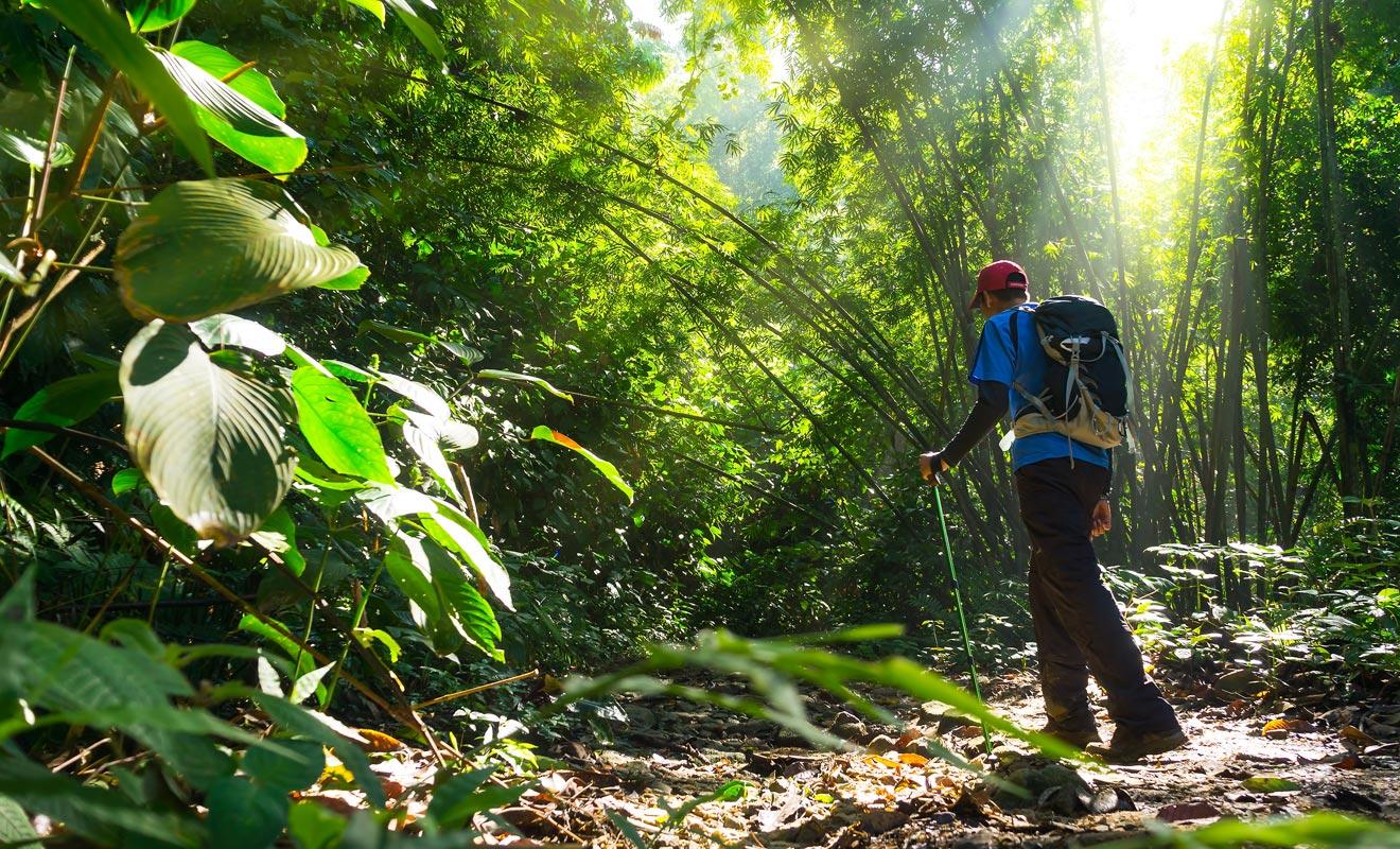 Les emplois proposés par le Département de la Conservation vont de l'entretien des sentiers, en passant par la construction d'abris jusqu'à la protection des espèces menacées comme les kiwis.
