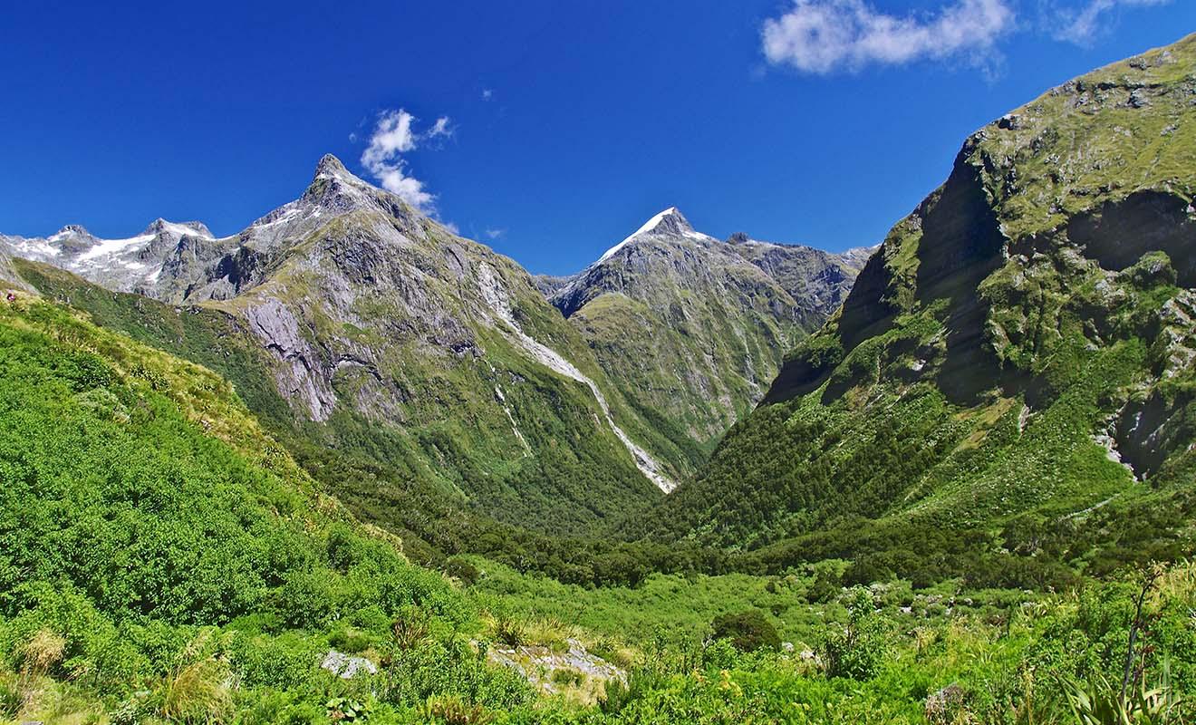 Le Fiordland est recouvert d'une forêt dense et les arbres poussent même à flanc de montagne.