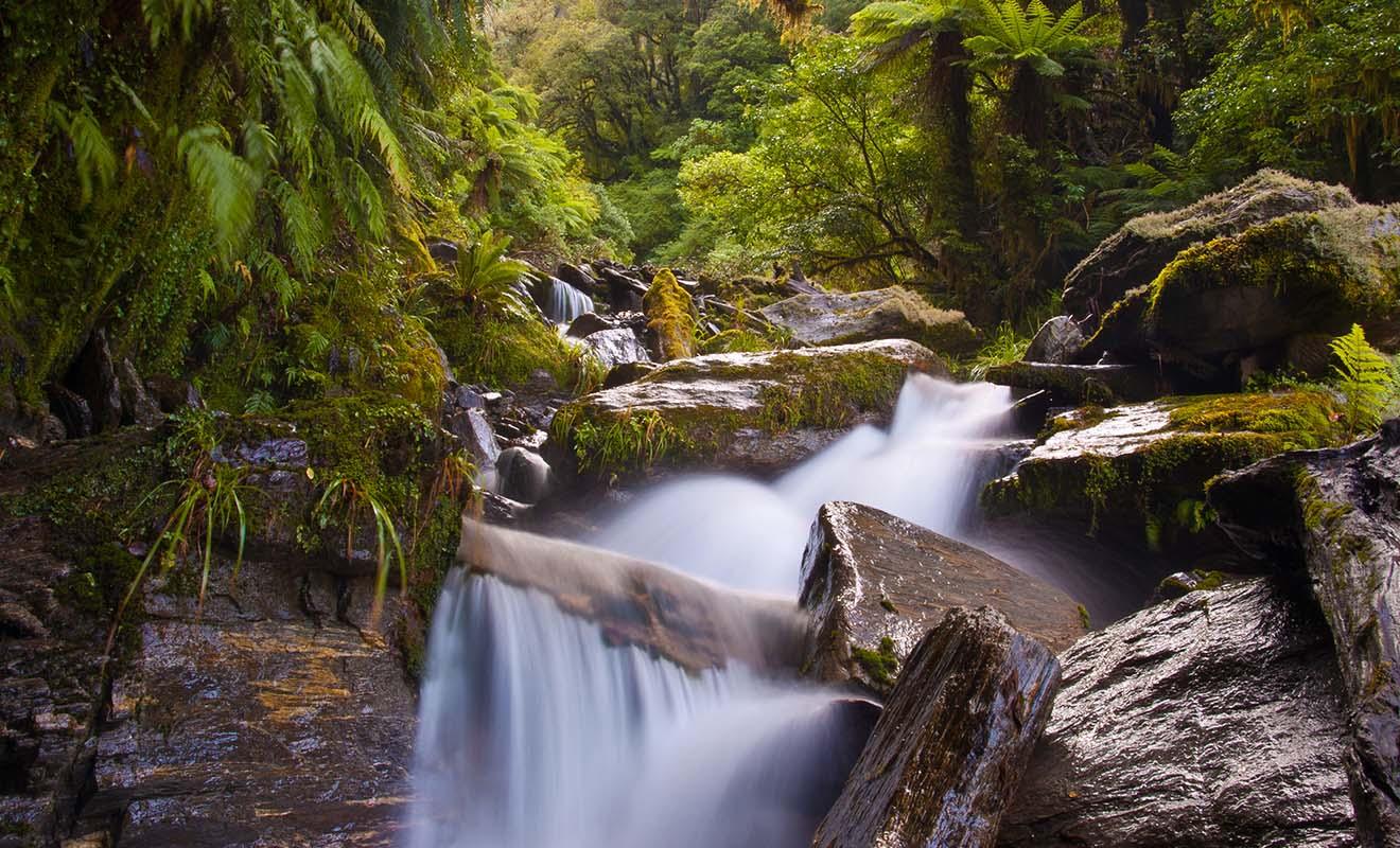 Les arbres de Nouvelle-Zélande sont à feuilles perpétuelles, ce qui signifie que le pays reste magnifique même au cœur de l'hiver.