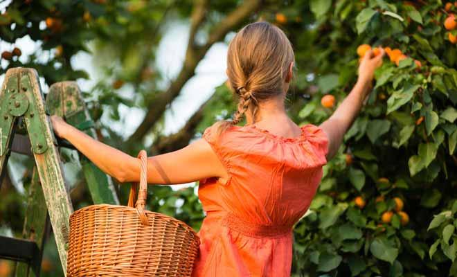 Travailler dans l'horticulture ou dans la cueillette des fruits durant son séjour peut vous permettre de décrocher une extension de visa. Dans ce cas, vous pourrez rester trois mois supplémentaires en Nouvelle-Zélande.