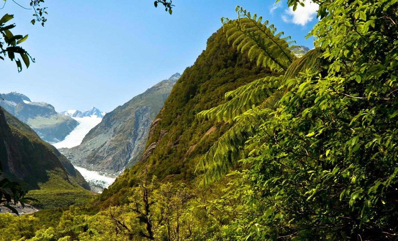 Les glaciers qui descendent jusqu'au niveau de la mer sont rares. Le Fox Glacier traverse même une forêt subtropicale !