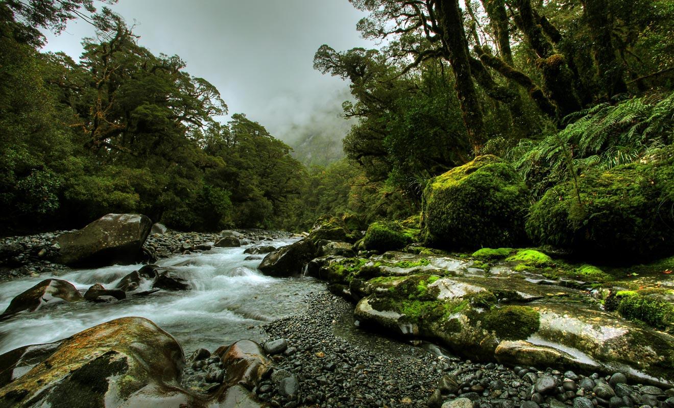Découverte par les Maoris au 8e siècle, la Nouvelle-Zélande était une terre sauvage. Aujourd'hui encore, certaines forêts impénétrables de l'île du Sud demeurent méconnues.