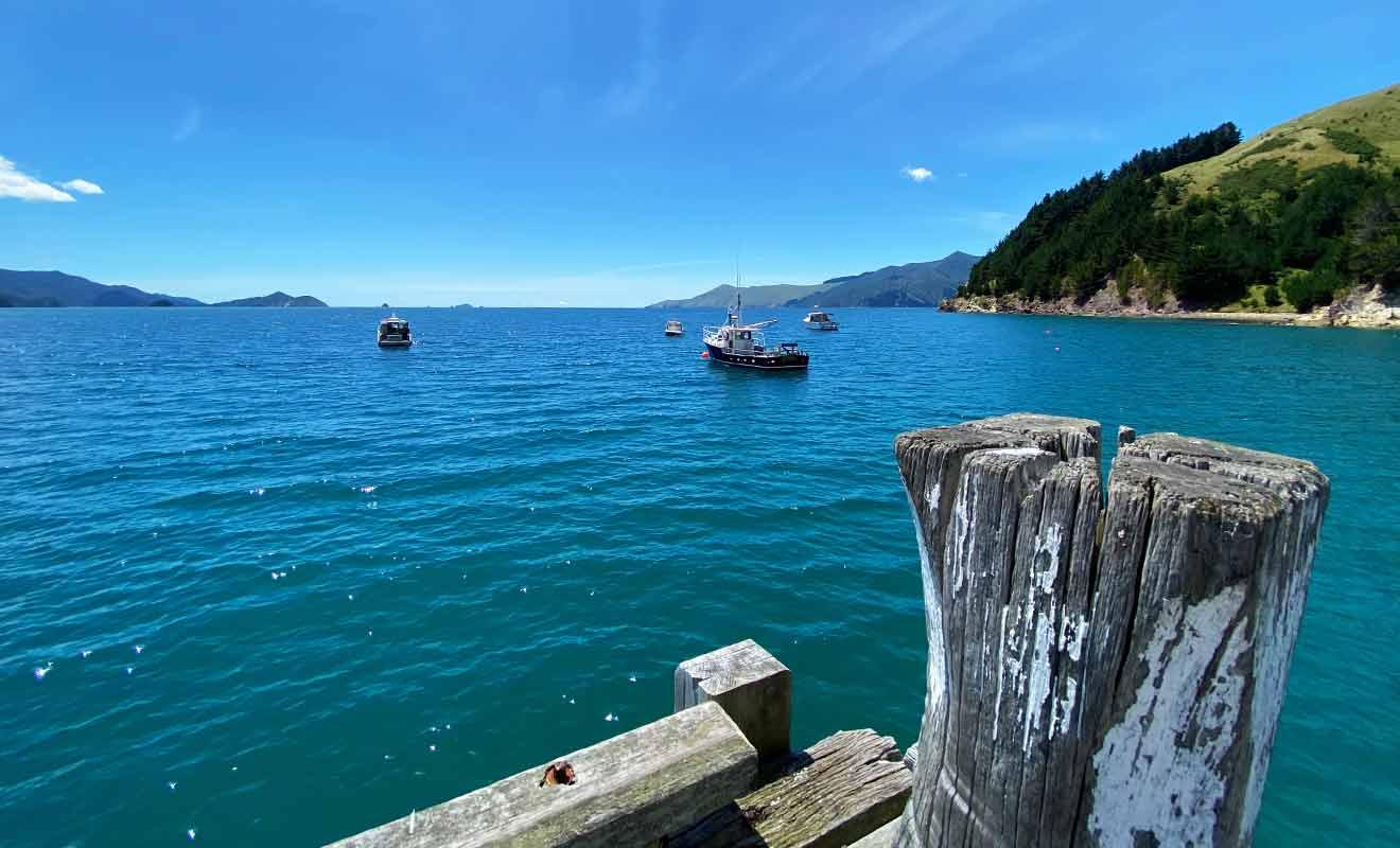 Les Marlborough Sounds regorgent de maisons de vacances en bord de mer.