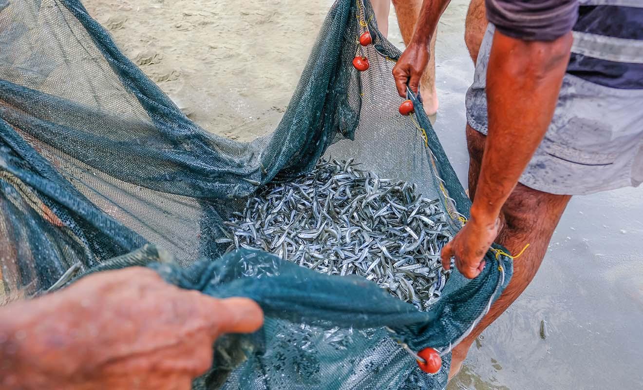 La pêche du Whitebait n'est autorisé qu'entre août et novembre et il existe des quotas très stricts.