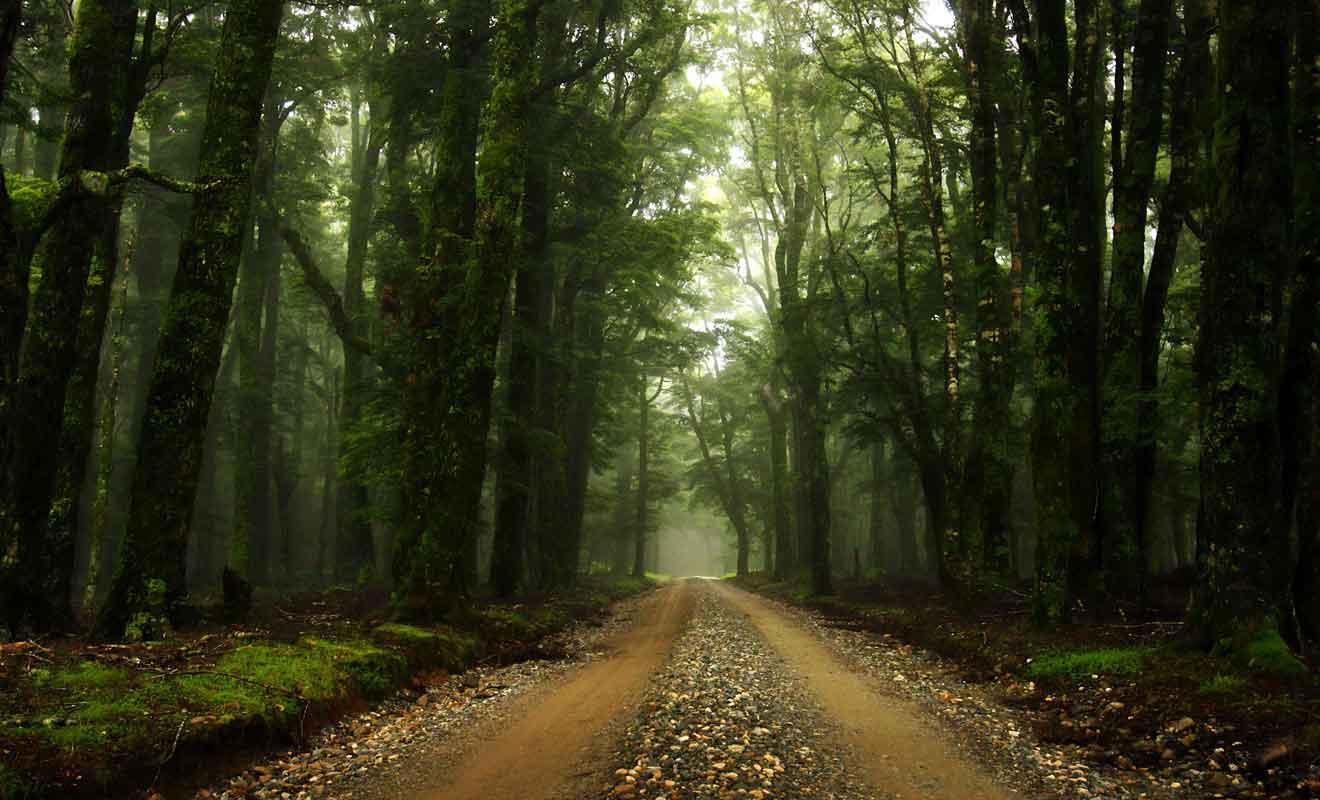 C'est dans cette forêt que Peter Jackson a tourné la poursuite avec les Nazguls.