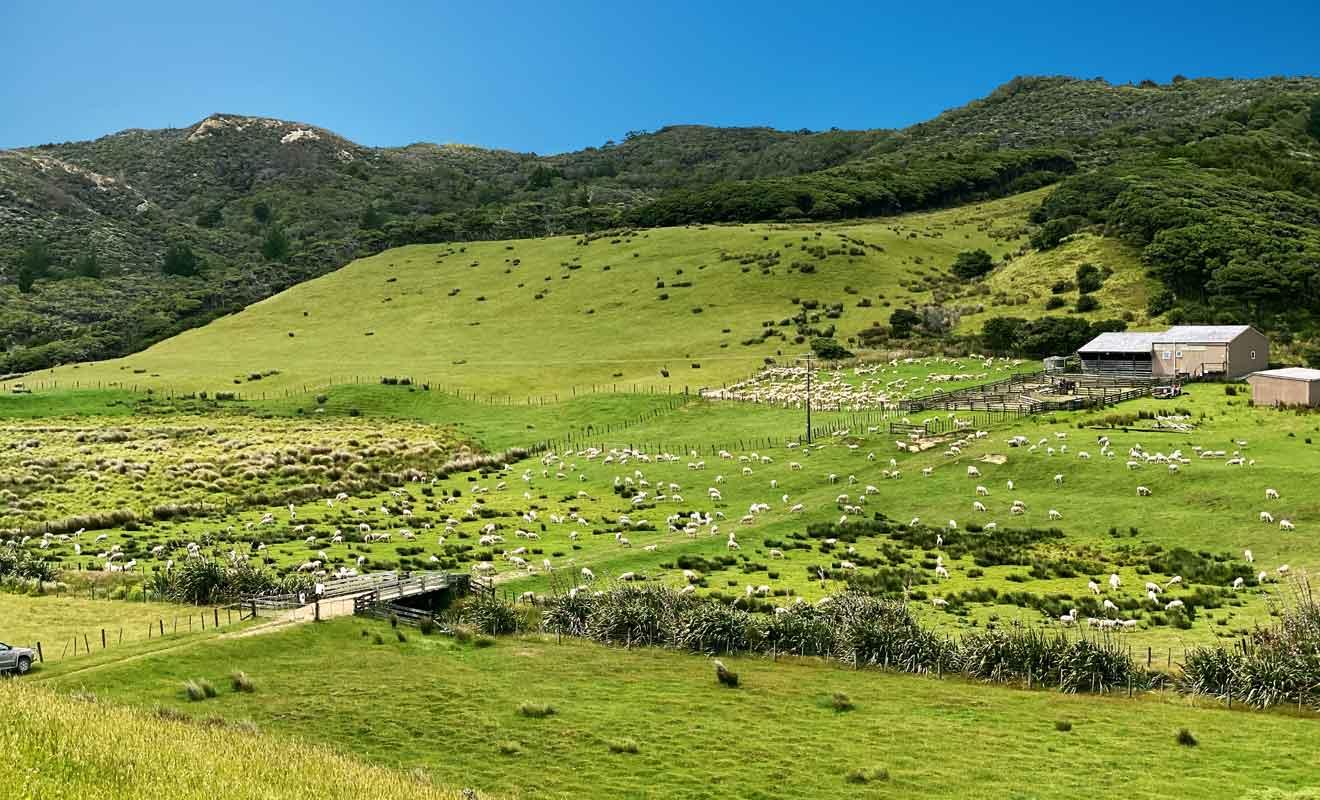 Selon la saison, vous pouvez croiser des moutons dans les pâturages.