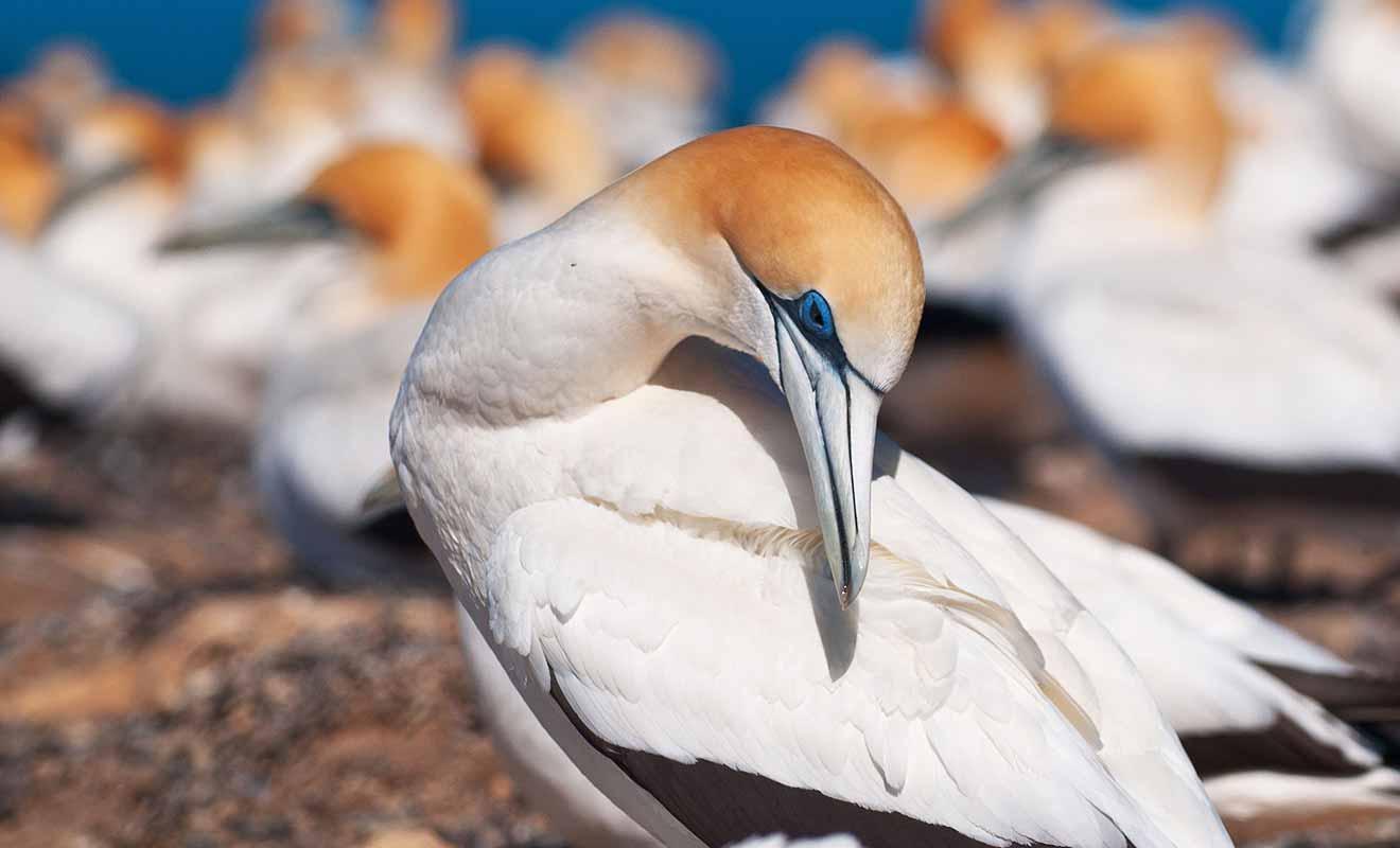 Farewell Spit est une réserve naturelle placée sous la protection du Département de la Conservation.
