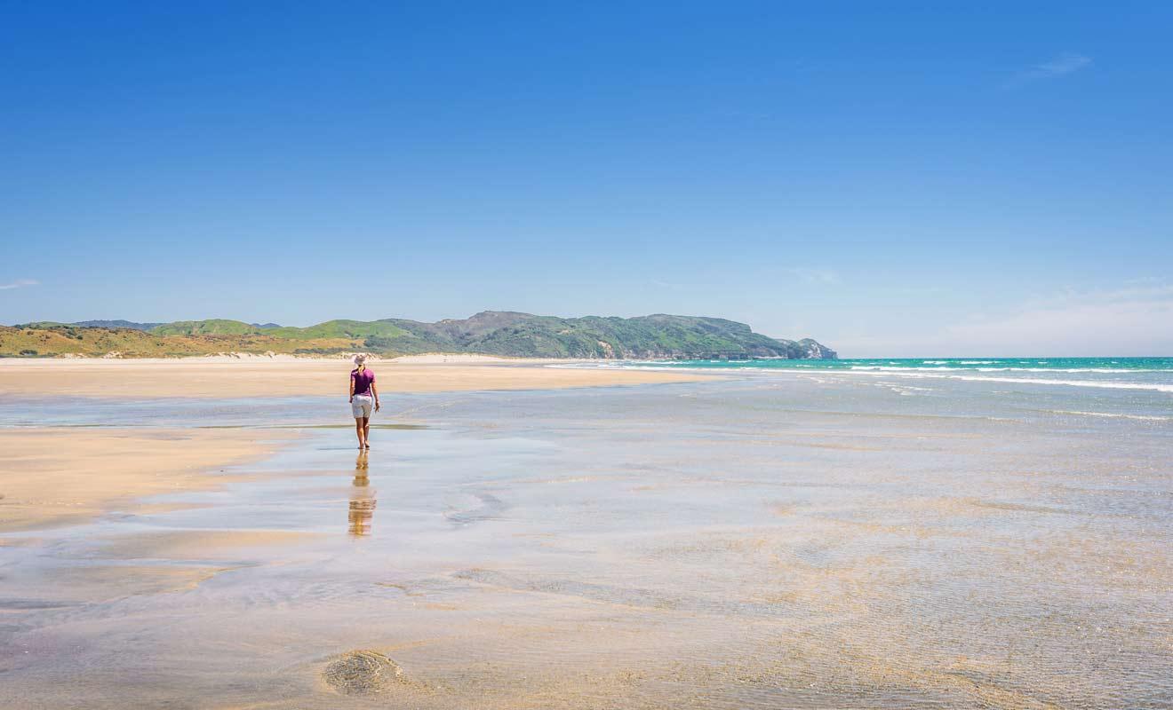 Vous pouvez rejoindre Fossil Point à pied ou commencer par un petit tour dans les dunes.