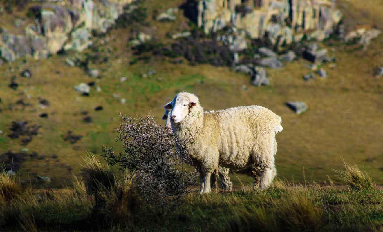 Mis à part quelques moutons qui vous dévisagent, vous êtes seul au monde.