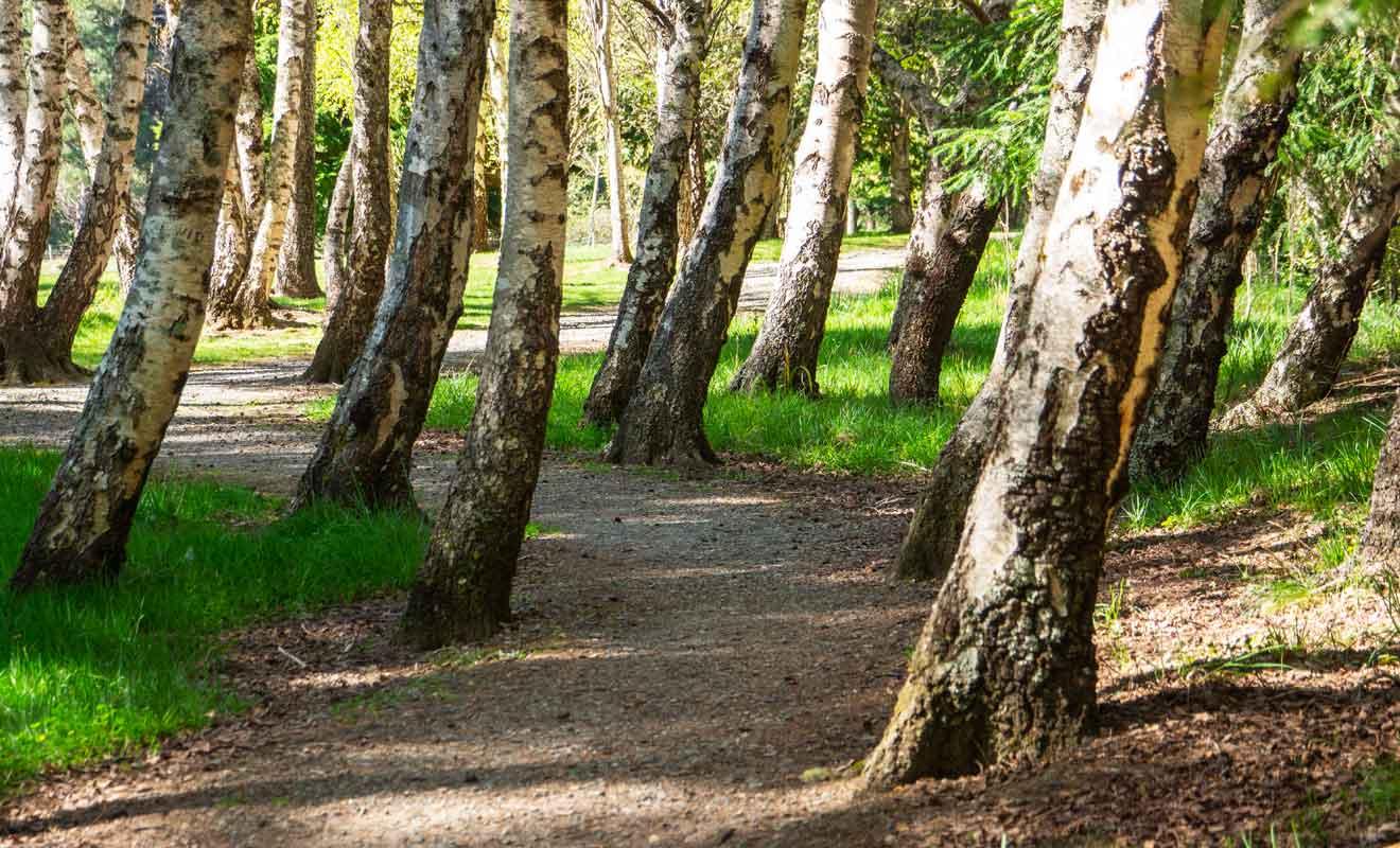 Cela n'empêche nullement la forêt d'être magnifique, au contraire !