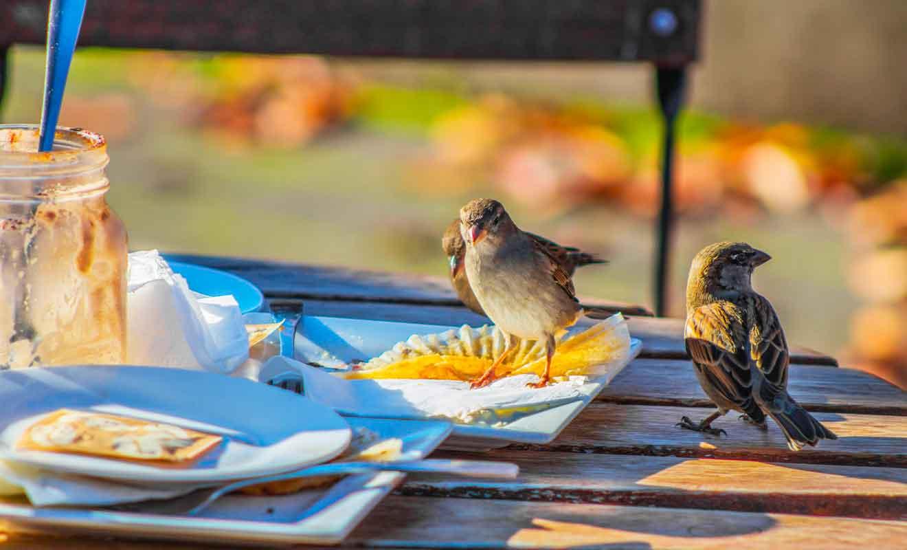 Vous pourrez déjeuner sur place ou acheter des sandwichs pour partir en randonnée.